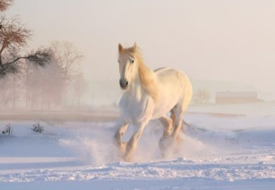 5 Useful Tips to Take Care of Your Older Horses in Winter