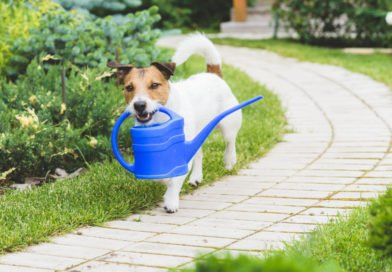 Designing a Beautiful and Pet-Friendly Garden