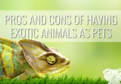 Pros and Cons Of Having Exotic Animals As Pets