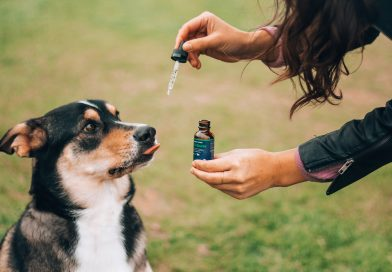 CBD for Pets: What to Know Before You Buy
