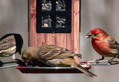 Tips and Tricks To Invite Animal Friends To Your Back Yard