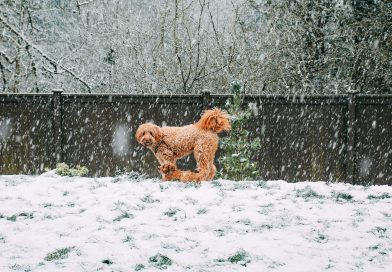 The Ultimate Guide To Winter Wellness For Your Dog